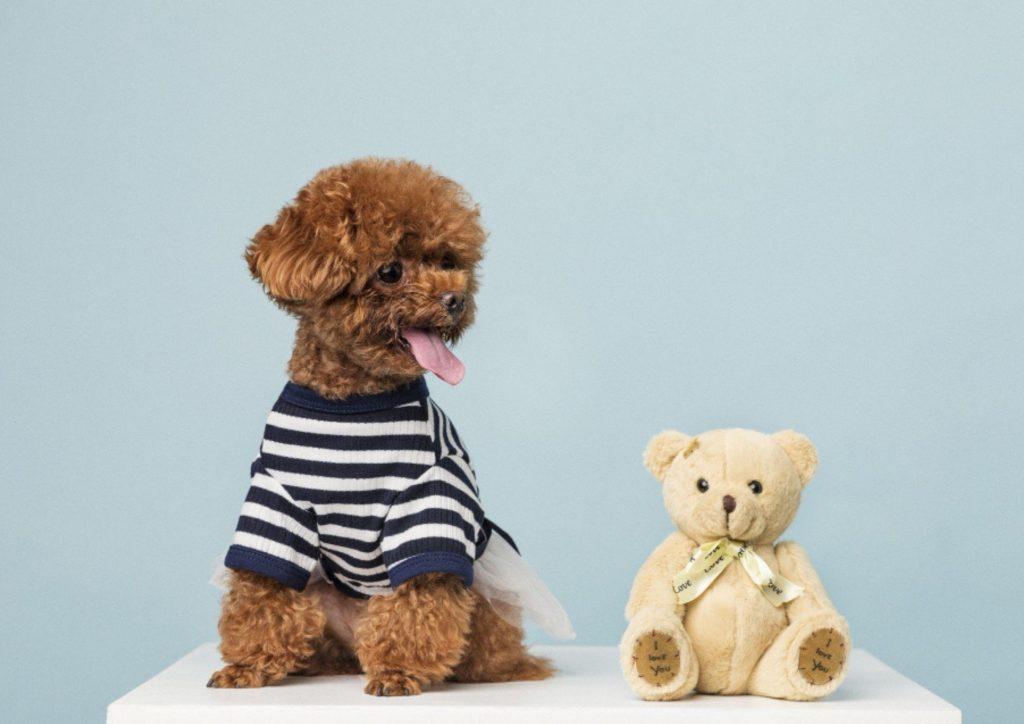 狗狗布料玩具