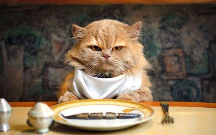 新手養貓要準備之食物碗